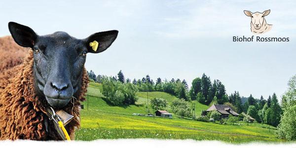 feines Lammfleisch direkt vom Biohof Rossmoos!
